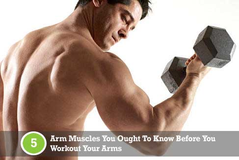 Arm Muscles: Biceps, Triceps, Brachioradialis | WorkoutTrends.com