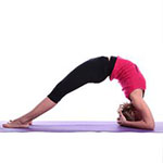 Bridge Pose on Elbows thumbnail