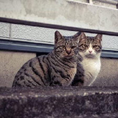 野良猫の兄弟