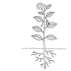 plant parts diagram labels without flower worksheet labeling leaf plants structure root coloring van seed stem blank printable plante die
