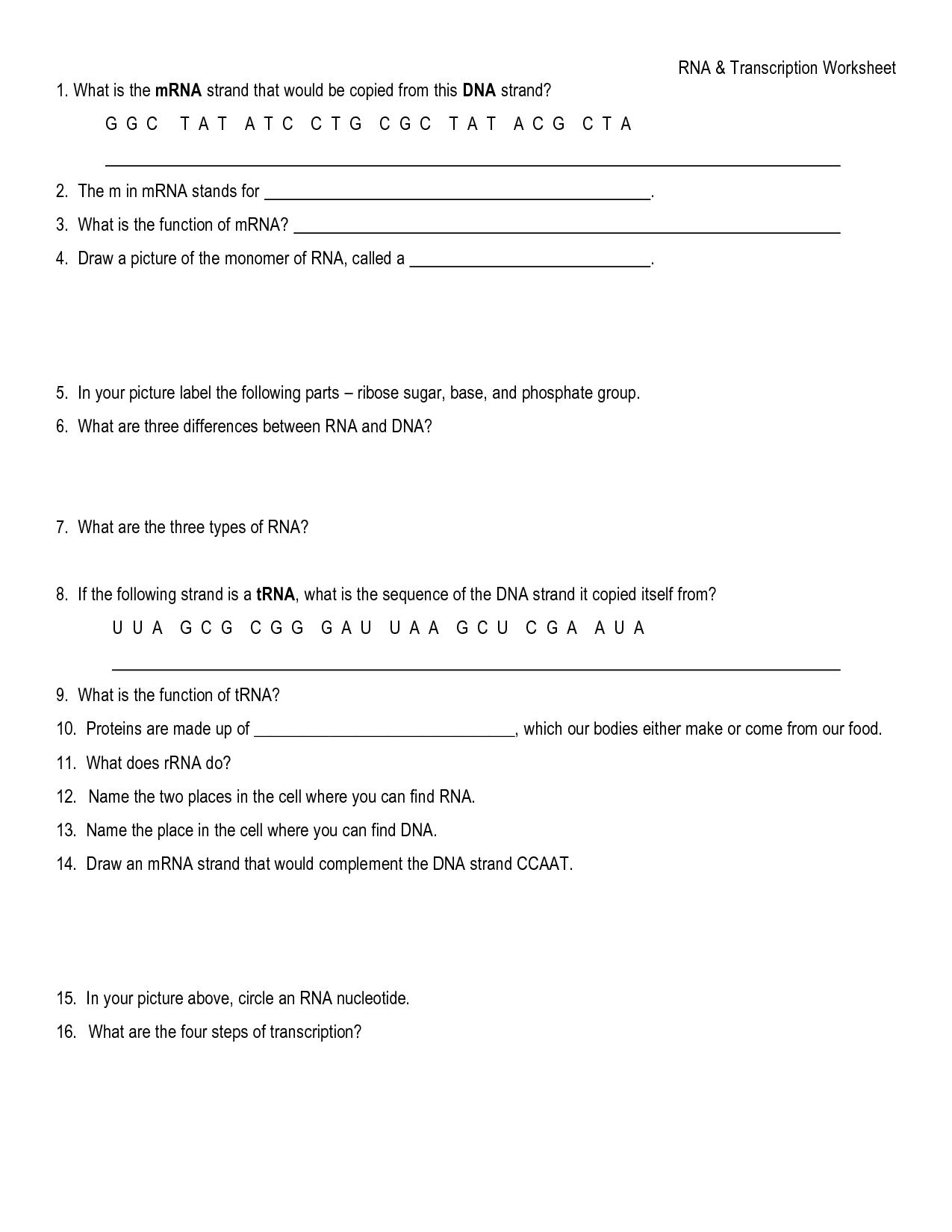 19 Best Images Of Dna Transcription Worksheet Dna