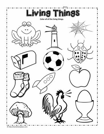 Circle the Living Things Worksheet Worksheets