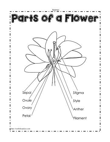 Parts of a Flower (Labeled) Worksheets