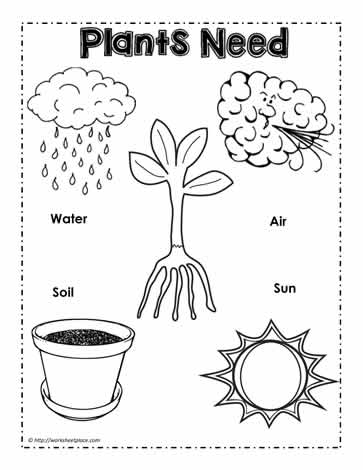 Plants Need Poster Worksheets