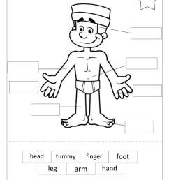 14 Best My Body Worksheets images on Worksheets Ideas [ 1079 x 763 Pixel ]
