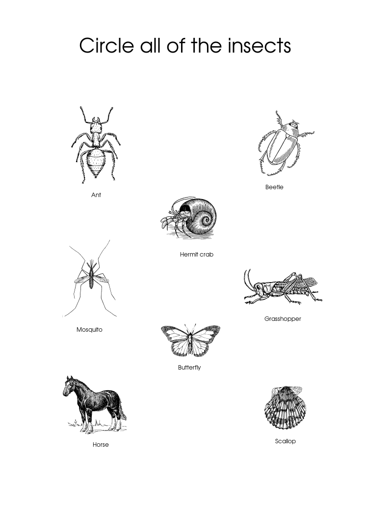 "Biology worksheet on taxonomy for pre-schoolers: ""Circle"