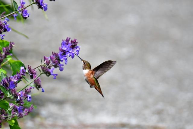 幸福の象徴ハチドリ