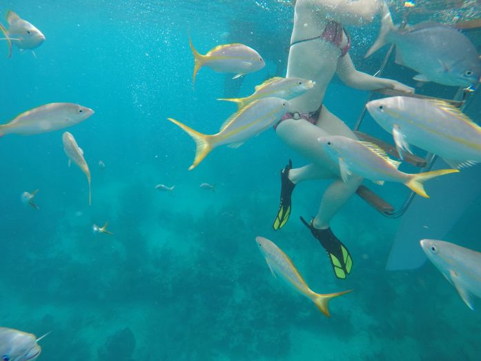 Jacques Cousteau Underwater Reserve