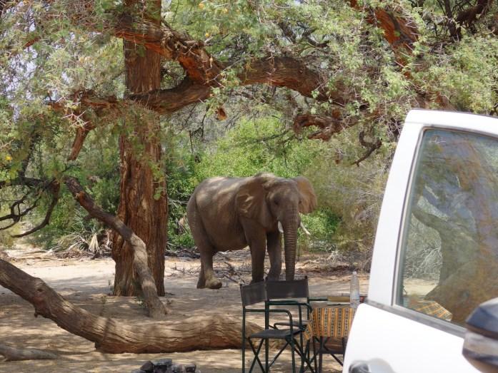 Elefantenbesuch auf der Campsite in Purros