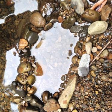 石蠶-石蟲