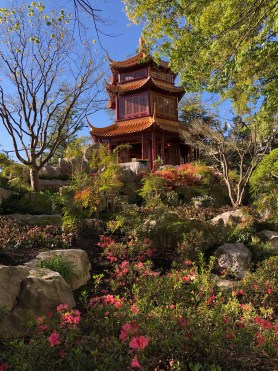 Best Things to Do in Sydney:  Chinese Friendship Garden