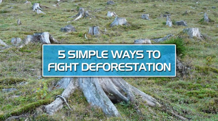 featured8 - 5 simple ways to fight deforestation