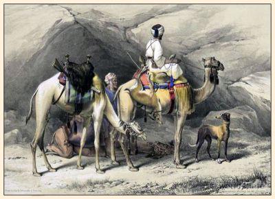Arabian traditional costumes. Dromedaries Halting in the Desert.