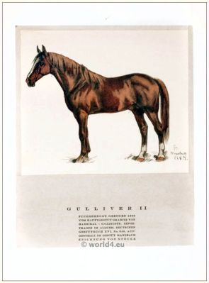 Gulliver II chestnut stallion 1909. STYL, Art Déco Fashion Magazine.