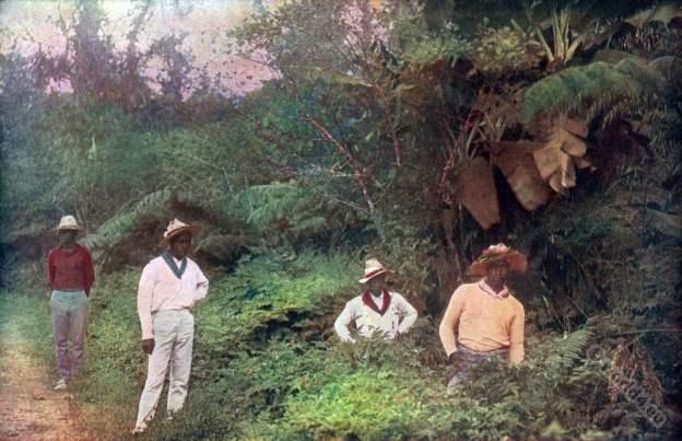 Native Hawaiians. Hawaii Coffee Pickers costumes. American colonialism.