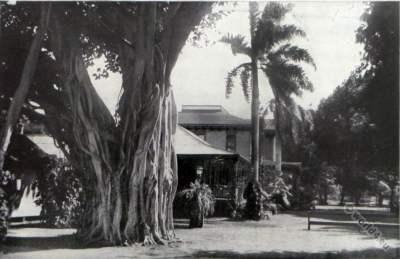 Banyan tree. Princess Kaiulani. Sheraton Princess Kaiulani Hotel Hawaii. Waikiki Beach. American colonialism.