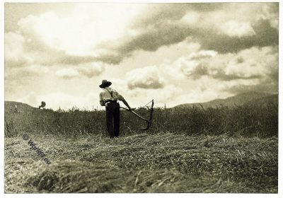 Harvester, reaper, Berkshire County , Massachusetts, Arthur Scott,  John Coleman Adams