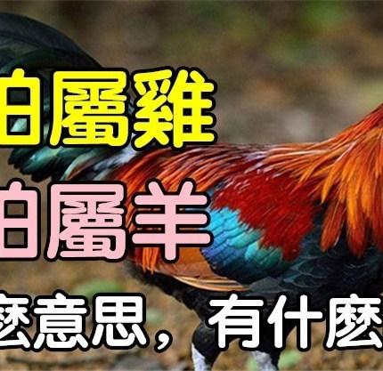 農村俗語:「男怕屬雞,女怕屬羊」你知道是什麼意思嗎?