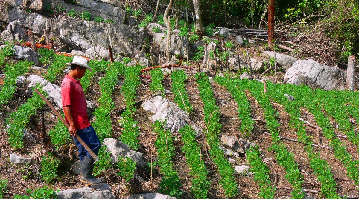 Project Global Village (PAG) - Honduras - World Accord