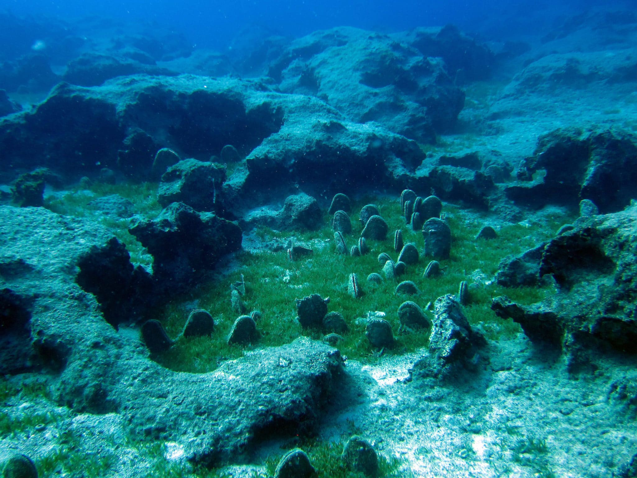Kas diving - fan mussel field