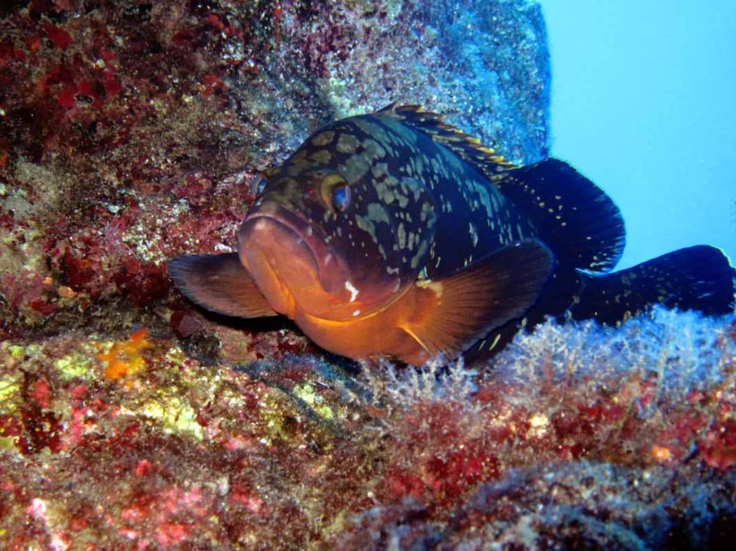grouper Kas Turkey