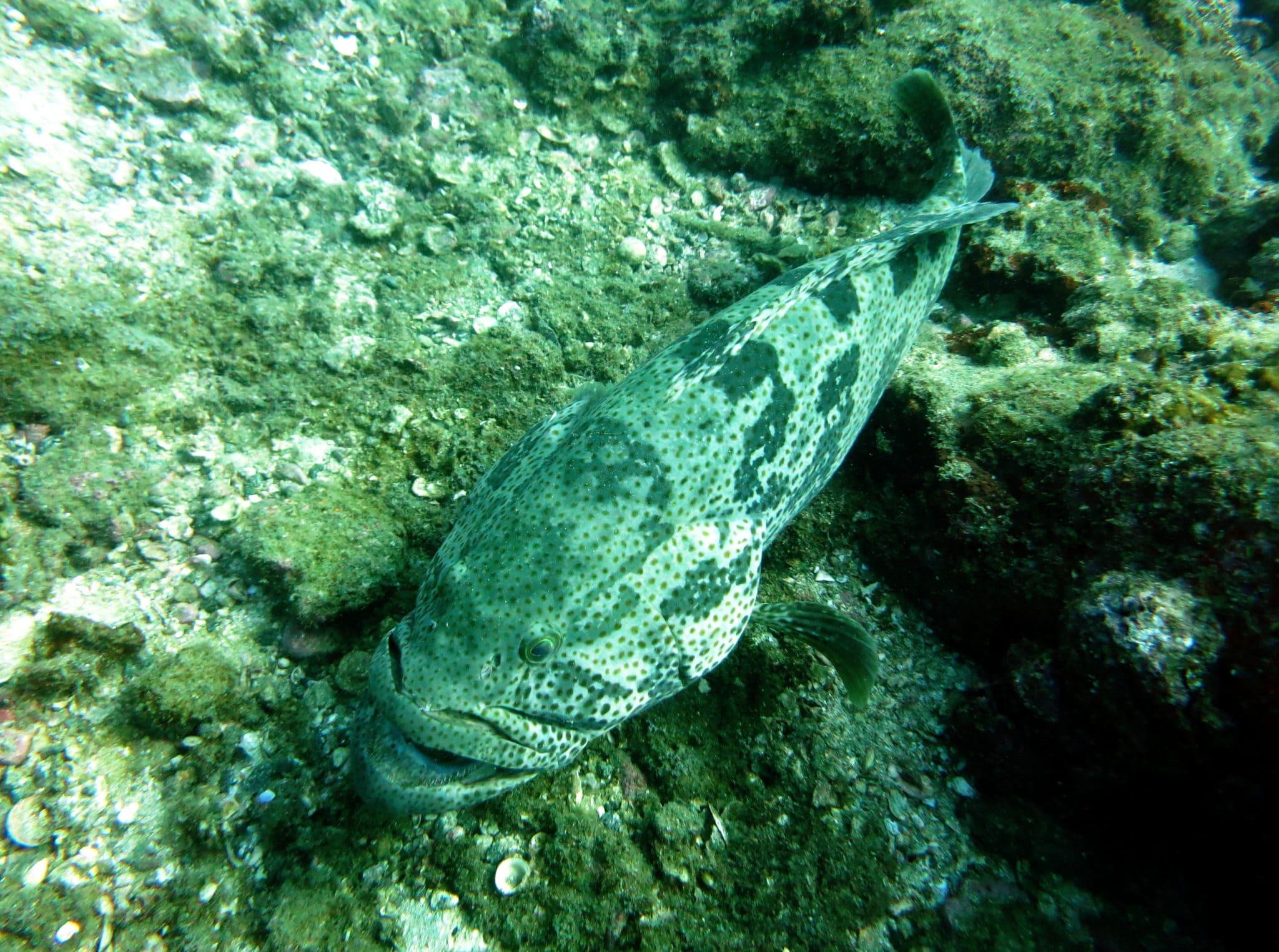 Netrani Island - Diving in India