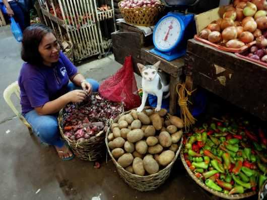 Market Dumaguete Negros Philippines