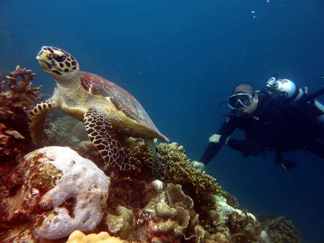 Turtle Scuba diver Pescador island Moalboal Cebu Philippines