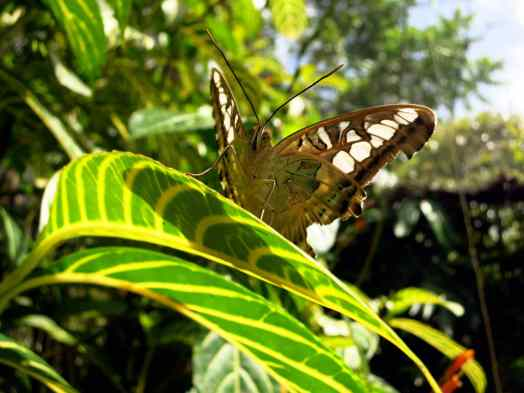 Bohol countryside Butterfly sanctuary Chocolate hills Philippines