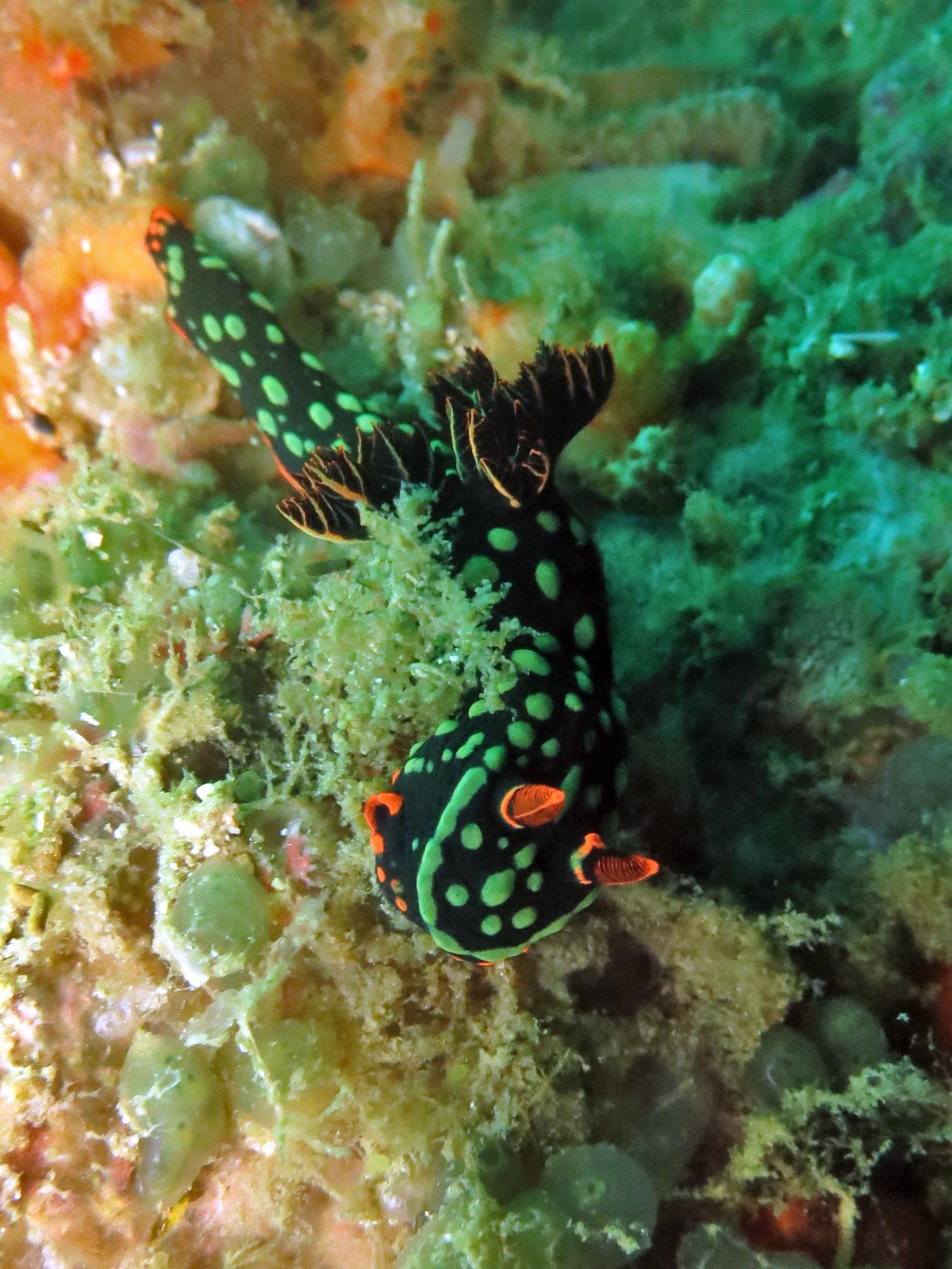 diving in Malapascua