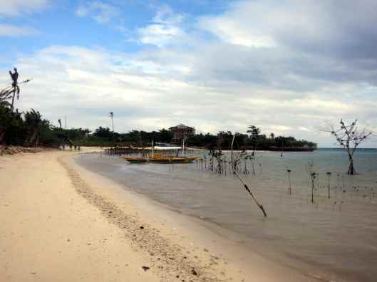 Beach Replanting Mangrove Malapascua Philippines