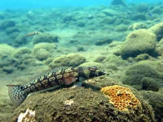 scuba diving Tulamben Bali Indonesia