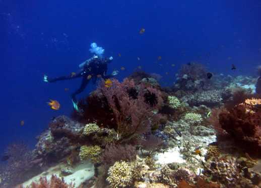Scuba diving Menjangan Island Bali Indonesia