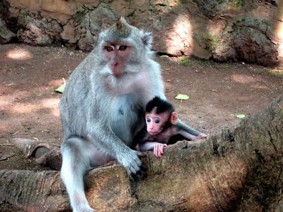 Monkeys Uluwatu Temple - Bali road trip itinerary