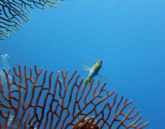 scuba diving in Menjangan Island Bali Indonesia