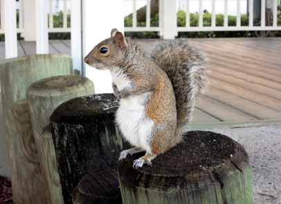 Squirrel Plantation Resort Crystal River Florida USA