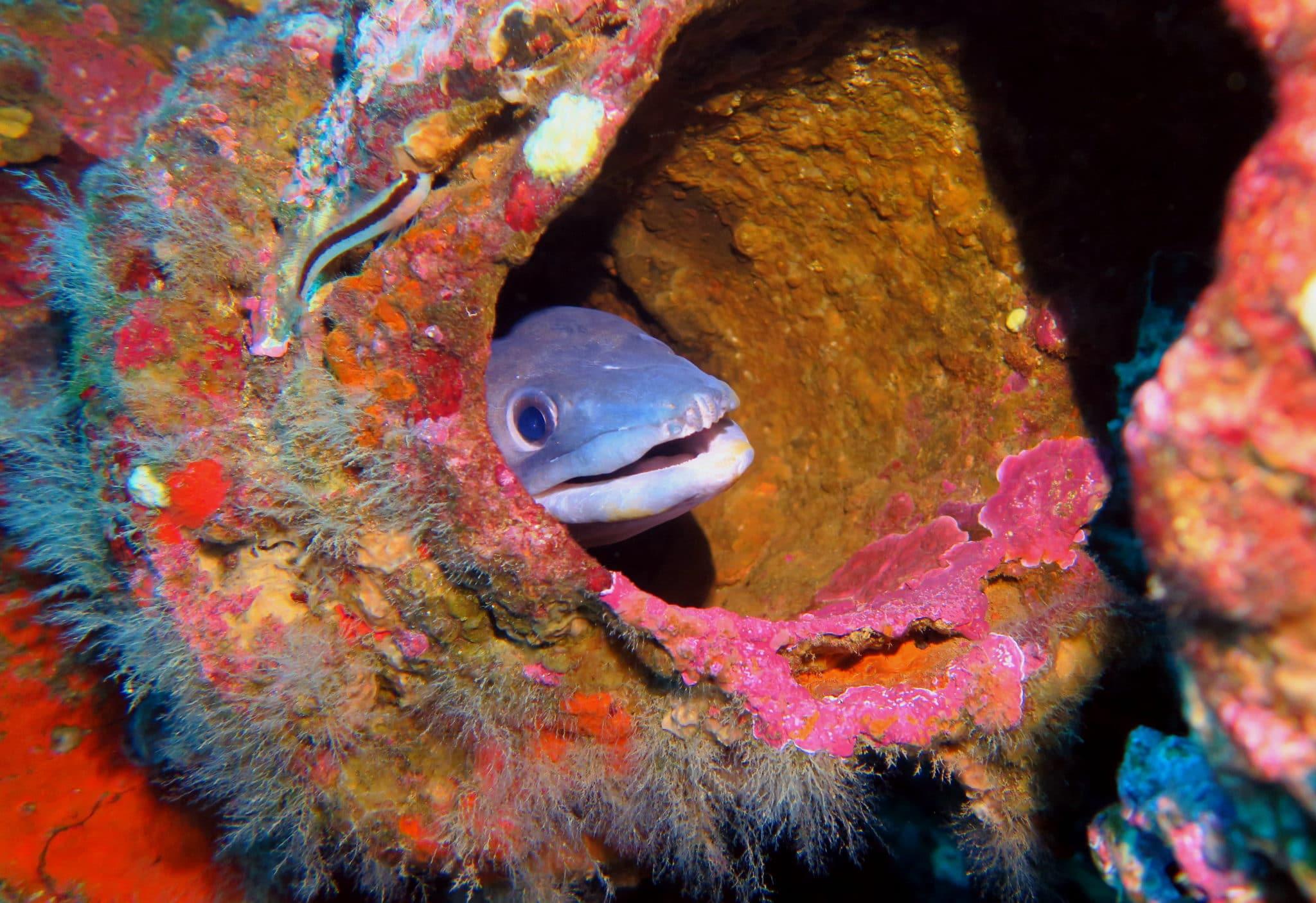 Conger Le Rubis submarine wreck dive Cavalaire France