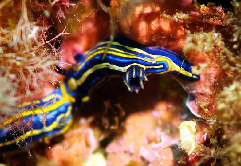 doris nubibranch scuba diving porquerolles France