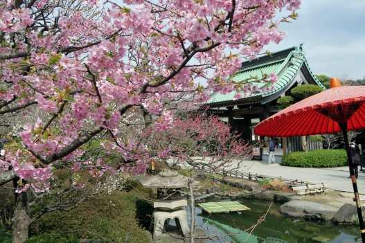 Hasedera Temple Kamakura Japan