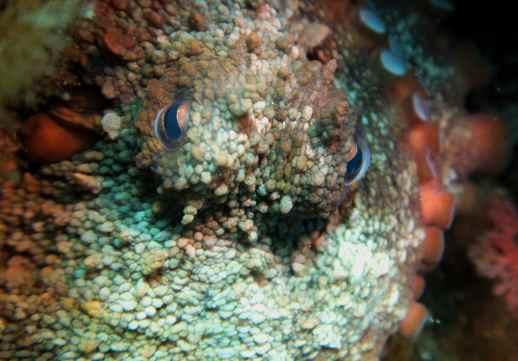 Scuba diving Dubrovnik Croatia