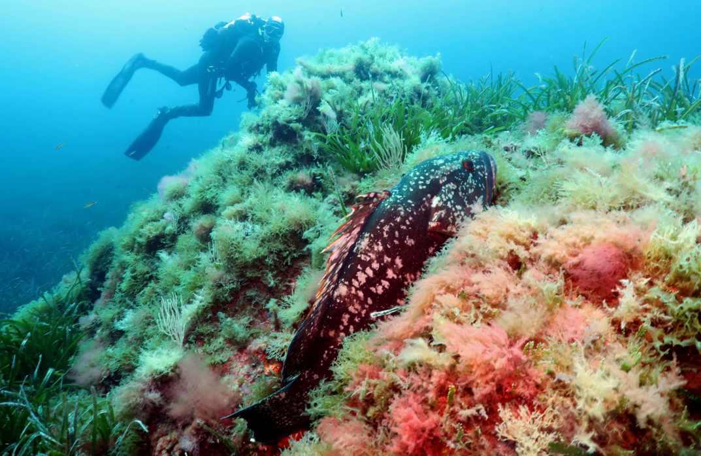 Scuba diving Port-Cros National Park France