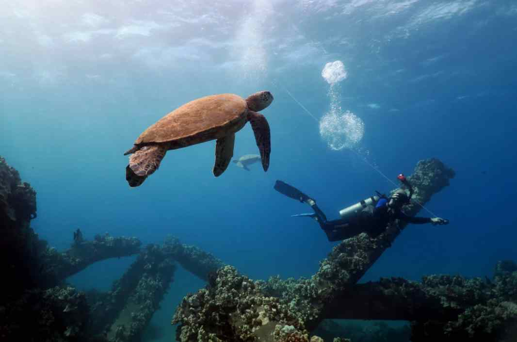 Turtle Mala Wharf shore diving Lahaina Maui Hawaii