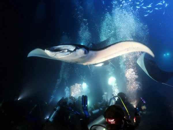 Manta Night Dive in Kona Hawaii