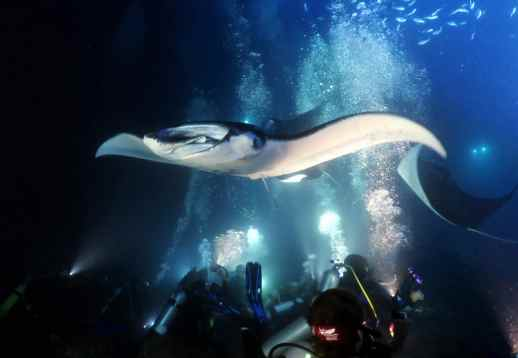 Manta Night Dive in Kona Hawaii