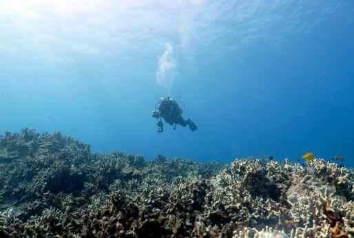 Shore Diving Two Steps Refuge Scuba diving Big Island Hawaii