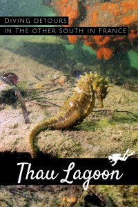 Seahorses - Scuba diving in Thau Lagoon France