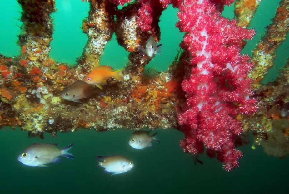 Scuba diving in Hatsishima Japan