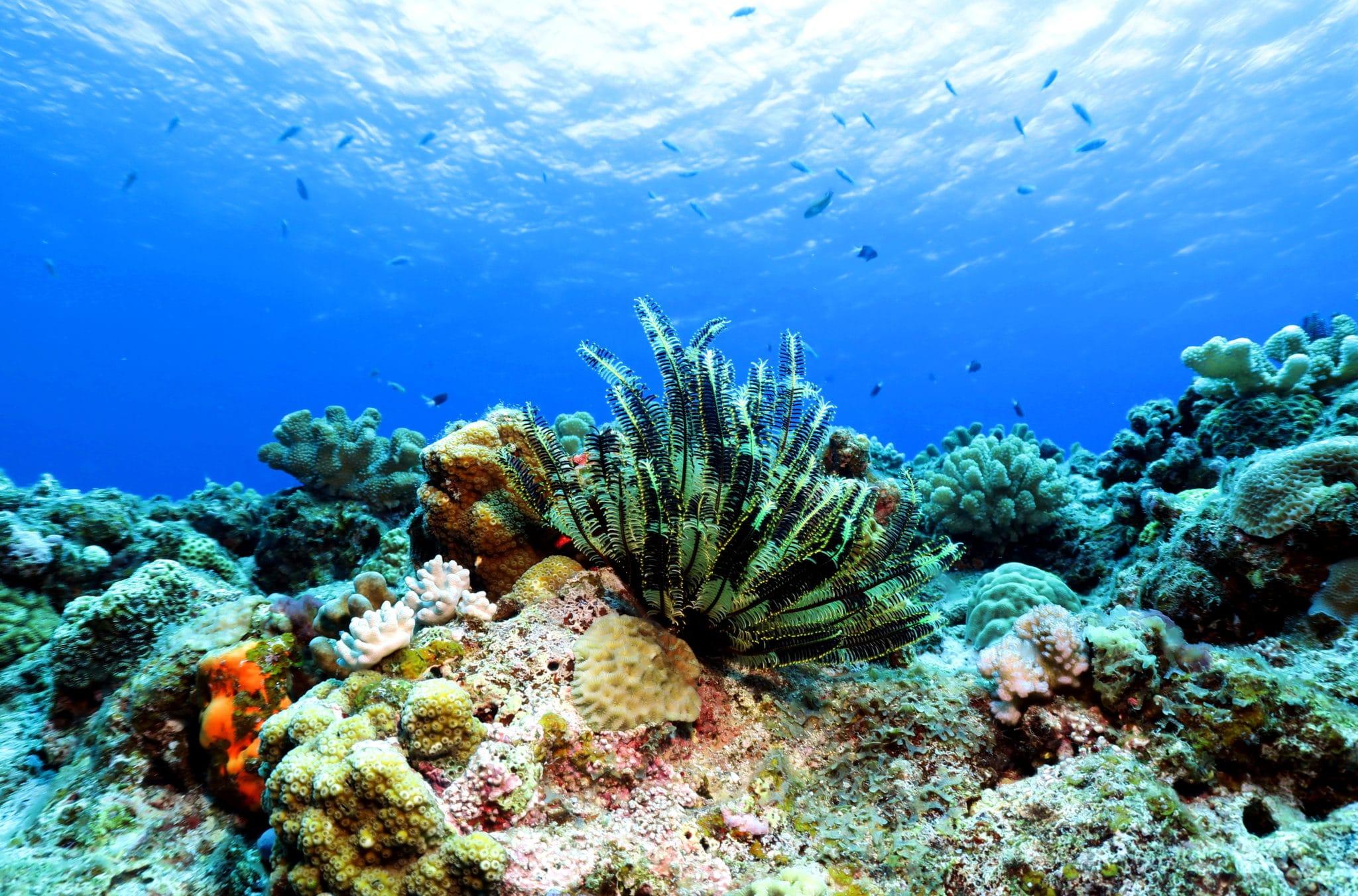 Scuba diving in the Kerama Islands Okinawa Japan