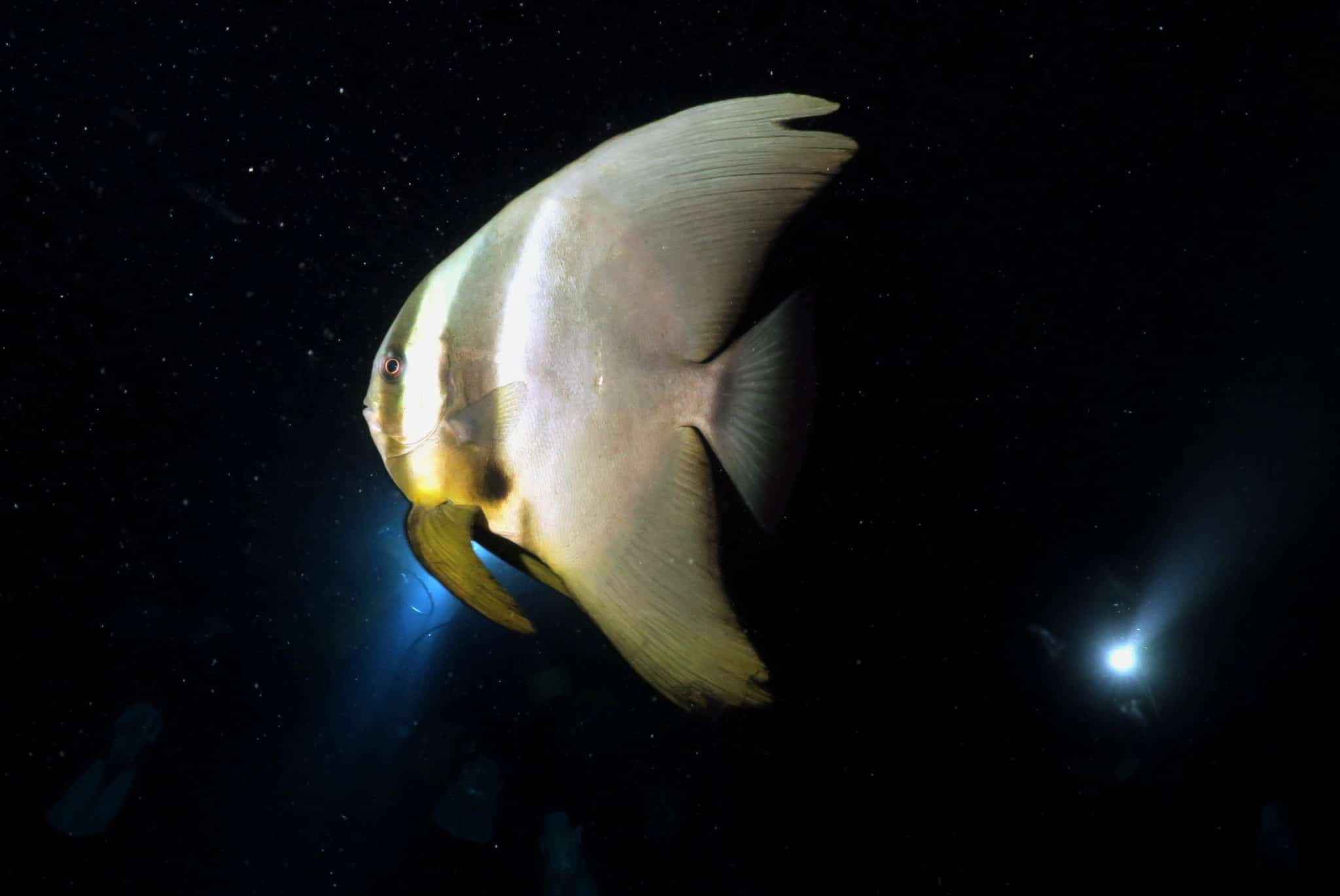 Scuba diving Blue Cave Cape Maeda Okinawa Japan