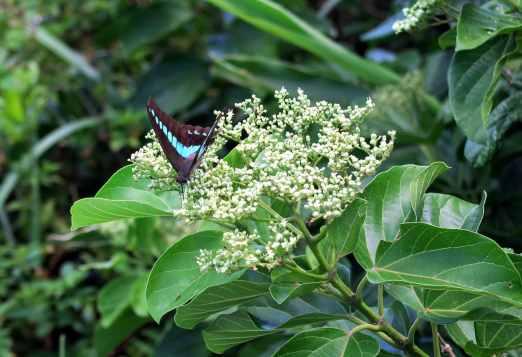 Butterfly at Cape Manzamo Okinawa Japan